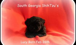 South Georgia Shih Tzu's CKC registered puppies Males and Females with beautiful coloring. All puppies will go with puppy packs (blanket,food,favorite toy, registration papers, shot records)They will be utd on all shots and deworming before placing in a