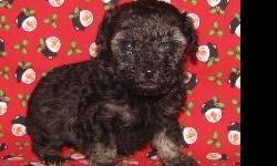 They have their tail and dew claws done and come with 1st and 2nd shots and worming. They also come with a 1 year health gurantee on genetics. Please see our website at www.toypoodletopia.com or call 931-858-7439