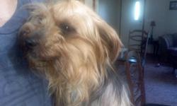 Hello, I have a 16 month old parti female yorkie for sale. She is so sweet and needs nothing less than a fantastic home with people who will love her. She is completely housebroken and ready to go! She also comes with the form to send off to register her