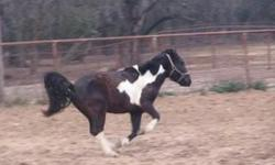 Saddle breaking, finish work, reining, dressage, hunter over fences, competition and much more! Fort worth texas 561 688 3970 Texhorselady.com