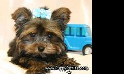 We work with a small group of private breeders that are USDA registered. They raise their puppies at home so their puppies are well-socialized. We specialize in toy breeds and also very tiny teacup and pocket size dogs. We are affiliated