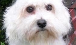 1 male tri-color(21/2 years), one white female (41/2 years), great personalities, loving and sweet, good with children.
