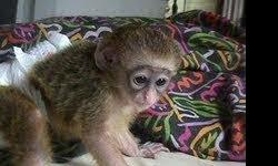 Hello, I am giving my Cute baby Capuchin Monkeys For good homes  to any pet loving and caring family no matter where ever they might be. My Babies Monkeys are house raised babies Capuchin monkeys that are diaper trained, leash trained , wears clothes and
