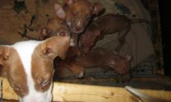 5 FEMALES. BEAUTIFUL, LOVING, ADORABLE DOGS. MOUNT MORRIS, MI PRICE IS NEGOTIABLE. MUST GO!