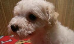 Designer Mix puppies starting at $200. CavaChon & Bich Poo males $200. . Morkies & Shorkies $400 & $450. Reasobnable priced delivery June 24th. 740-294-7723.