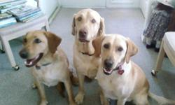 My name is Amy and I have been pet sitting and dog walking my entire life. I love animals and I treat all my clients pets as if they are my own. Please visit my website for more information. www.amyspetservices.com