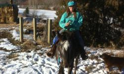 These Horses are listed on :wwwsells.com.  Pearl is a gray Appy mare, she is 6 years old 16hh. Pearl is a puppy dog, she loves to be with people she is currently being started ground driving. She is mellow and she will pull a barrel around with the