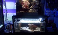 Double Refugiums and Stand, to hook to your reef aquarium. Up and running. Icludes live sand and lights. Everything you see. Also the refugium upper has protien skimmer. Located in Green Valley WI, outside of Pulaski. Half hour from Green bay. Call