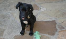 My 1 year old Black Lab, neutured, housebroken, crate-trained needs a foster home with a yard and companion before July 25th. He will need to be fostered up to 3 months hopefully less. I can help with food and would like to visit often. I can give more