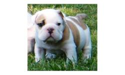 Well home and potty trained male and female English bulldog puppies for free to good home.they are very healthy pups and have all their registered and health papers.very good with kids,adult and other pets.interested should contact us via email for more