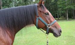 Located in Bonneau, South Creek Farm offers English riding lessons; instructor has over 30 years experience. Learn how to handle, tack up and ride a friendly horse this winter! Private and semi-private lessons. Call -- for more info.