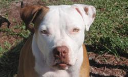 Meta is a 1 year old staffordhire terrier. She is spayed with all shots including rabies and heart worm preventative. She is as sweet as they come. She is not agressive with anyone or any dogs. She does not posses over food or water and she walks next to