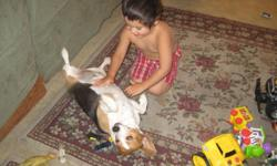 4 YEAR OLD FEMALE AAA BLOODLINE BEAGLE, NEEDS HOME ASAP! HER OWNER LEFT HER AND HAS NOT PICKED HER UP, WE CANNOT HAVE PETS!! SO NEED TO GET HER A HOME ASAP! BABY IS AWESOME WITH CHILDREN, VERY MELLOW, HOUSE BROKE, NEEDS TLC! GREAT FAMILY PET! I REALLY DO