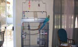 4 year old female blue & gold needs to find a home. A home where she can get the love & attention she needs. Asking $1500.00 re-homing fee. She will come with her Huge Cage & toys