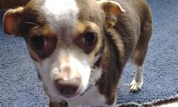 I have a female Chihuahua for sale asking $100. She is house trained. And great with children. She is a very good dog. She is not neutered. I'm moving to a apartment and can't take her. For more into --