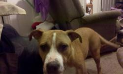 Female pitbull tan and white,awesome dog who loves other big dogs,not so much little dogs,nor cats,other than that,her name is mulisha,she's house broken and loves kids.I would keep her but I already have a pitbull and my house is too small to keep