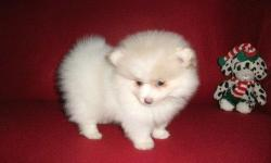 i will be looking forward to locating the best pet loving home for my 9 weeks old Pomeranian puppy who is really sad now due to my lack of time to keep her up, well please i will not appreciate people who will contact me for commercial purposes but just