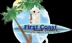 We are a small USDA and Florida Wildlife licensed breeder of sugar gliders specializing in the breeding of standard gray, white-face, white-tip, mosaic, leucistic and cremino sugar gliders. We handle our joeys from the time they come out of pouch to the