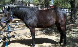Grindin N Drawlin (Jake) is a four year old register quarter horse gelding. Jake has a lot of potential for an individual who has experience in riding. Would be great for ranch work. This horse needs a job and a GOOD home. eastmount1@hughes.net Only