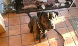 Found Black Lab mix, male on Piketown Rd. in Piketown area on 2/8/11. Dog has a blue electronic collar and appears to be in good health. Friendly and obedient. Call 850-429-0002