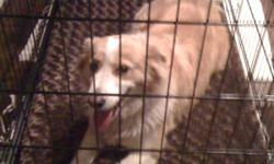 WHITE AND TAN WITH ORANGE COLLAR FOUND IN YOUNGSVILLE LA VERY FRIENDLY