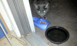 A couple of weeks ago, a long hair black cat was on my patio. She/he has no white spots and is completely black. She/he is very friendly. I saw an ad for a lost cat at the S. Daytona Val U Vet, and it looked so much like her/him. If you think she/he is