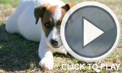 i am giving away a free female 10 month old jack russell/mix to a good home as she has too much energy for me you can see a few homemade vids and get more details here http://alimamagame.com/personalvids/fliphdtest.php