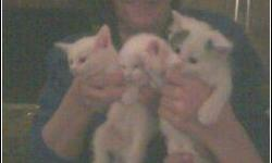 Free 6 1/2 week old kittens to good home. Weened. Eating solid foods. Garland, TX. Call: 256 533 1640 Ask for: Cindy