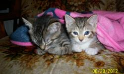 I am getting rid of 2 female kittens,i don't have the time to take care of them.I am way to busy to take care of them. i don't have any pictures of them but if you e-mail me i could send you a picture of them. my e-mail is countrymom1385@yahoo.comi