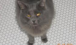 Male neutered 2 year old cat, free to good home. Playfull & friendly. We are moving and can not bring animals with us.
