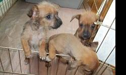 We have three small mix breed puppies for free to a good home. They are 7 weeks old, weaned from milk, and eating solid food. Mother and father have great temperments