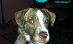 HELLO, MY NAME IS EVA. MY FAMILY ADOPTED ME FROM SOME VERY CRUEL AND HORRIBLE PEOPLE. UNFORTUNATELY MY BEST FRIEND WHO IS 5 YEARS OLD IS ALLERGIC TO ME. IS T...HERE SOMEONE OUT THERE WHO CAN GIVE ME A NICE HOME? I AM VERY LOVING, POTTY TRAINED , 10 MONTHS
