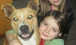 Bella is a wonderful 2 yr old pit, she is great with children and adults alike. She is a little hyper, but if she has someone to take the time to work with her, she will be a loving addition to your family. If ou have other pets you will need to introduce