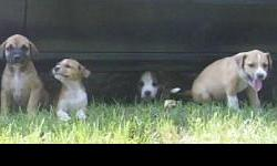 Free to good home cute and loveable puppies. Some are tan and white--some are tan and black. Call 912-565-7939