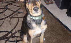 Wonderful Dog!! NEEDS LOVING HOME ***ASAP*** We adopted the Puppy, Dec. 2010... We Now have a NEWBORN BABY (3-days old.) and a 2-yr old. The Puppy Has Turned Out to be More than We can Handle. His Name is 'OPIE' was born Oct. 2010. ** HOUSE BROKE !!**
