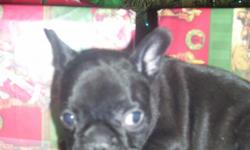 We have lots of puppies to choose from. Go fast Please checout our web site) www.terrilynnkennels.com