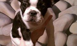I have one male Frenchie left, DOB 8/25/2010 he is such a sweet and cute like puppy. As papers first set of shots, vet checked,wormed if ypu have any other questions call me any time 269-757-3189 thanks