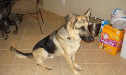 Beautiful adult black/tan pure bred German Shepherd. Looking for a good home. He has been neutered. I have to move and can't take him with me. His name is Luke. He is updated with all his shots. Friendly, house trained, loves people, best with children