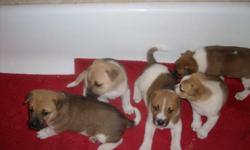 I have 3 german sheppard mix pups. Who all need a good home. We did not even know mommy was expecting until a week before she went in to labor!!! I have two females and one male. All white and brownish cream color! They have great temperment and are very