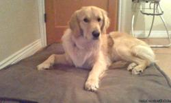 Looking for a good home for our Golden Retriver, hes a male pure breedgolden retriever, great with kids. Hes a very fun and energetic dog great family dog, we unfortntly do not have the time for him at this moment. We have had him for about a year