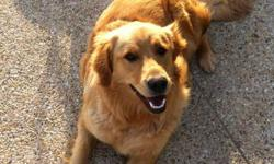 I am the owner of a very friendly and lovable Golden Retriever. Her name is Brandie and she is almost 1 year old. Brandie is an outdoor dog and she loves to play in and with water! I am searching for the perfect companion or family for Brandie with