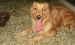 Family will be relocating. Need to find loving, permanent, perfect homes as soon as possible for our 3 golden retrievers. Lola is 4, Max is 3 and Frida is 2 years of age. Please email or call if you are interested in meeting our dogs.