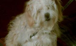 Diego is a medium size dog; potty trained, has shot record. He is half poodle and half Tshisu. He is Blonde and White. He does not shed at all. 7 months old. He looks like a fuzzy wuzzy bear; just absolutely gorgeous. I have decrease the price from $200