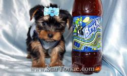 We have the smallest, cutest, best looking, top quality puppies in the world. Home raised, well socialized, potty trained, healthy, puppies that will make any family happy. Be smart and get your new puppy only from a good reputable breeder!!! Visit our