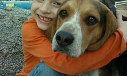 WONDERFUL DOG THAT WE ADORE NEEDS A NEW HOME. HE IS GREAT WITH THE KIDS (WE HAVE 5) AND GOOD WITH OTHER DOGS BUT NOT CATS. NEEDS A SECURE YARD. ONLY SERIOUS FAMILIES PLEASE. HE IS OUR FAMILY. THIS IS SAD FOR US...BUT WE CAN'T RISK UR CATS ANYMORE. THANKS