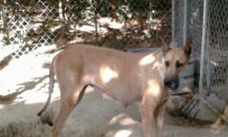 Patron is a 4 yr old female that unfortianatly i must find a home for . She is sweet temperment and Loves attention am sad to have to find her a new forever home due to loosing my job. She is AKC reg. Papers will go with her for 500
