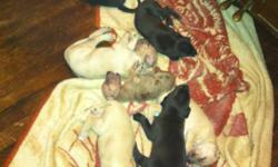 3 week pups need a new homeon Aug 2nd.We are accepting deposits. Please call - or - for more information. Parents on site.