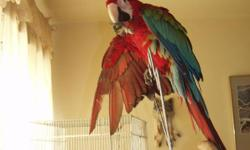 2yr old. Tame likes other animals. Would like to be placed in a good home. With someone who knows parrots. call 410-737-4678