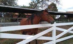 Joker is a 6 year old gelding. Free to a GOOD HOME. Owner has a bad back and has not be able to break him to ride. Please call Dennis for more info --