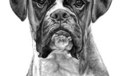 I am Genevieve Schlueter & I sketch highly detailed, lifelike portraits of people's pets all working from photos they provide to me. I have been in buisness for 10 years, fine tuning my craft to the quality it is today. I am reputable & reasonably priced